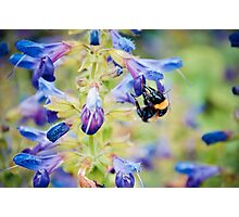 Pollen Sniffing Photographic Print