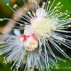 Wattle It Be by -aimslo-