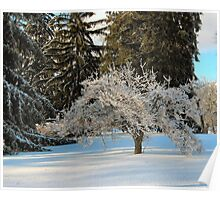 Ice storm - small tree Poster