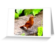 White-lined Tanager Greeting Card