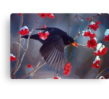 Black Bird in Flight Canvas Print