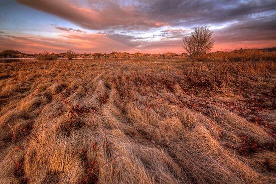 Sweeping Pink by Bob Larson