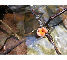 Flower in a Stream Photographic Print