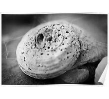 she sells sea shells ii Poster