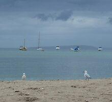 Gull patrol: Sorrento, Victoria by Sally Kate Yeoman