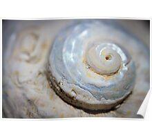 she sells - sea shells viii Poster