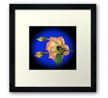 Orange Wildfire - Rose and Buds Framed Print