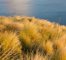 Morning Light on Tussock and Ocean by trevallyphotos