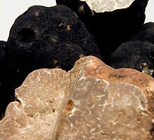 Oregon Black & White Truffles by OrPhotoJohn
