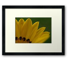 Bright Yellow Petals Framed Print