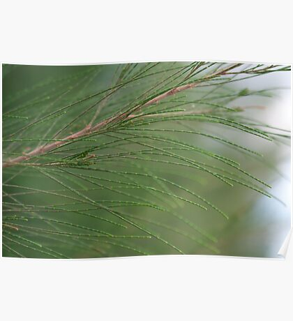 Branch of green fir tree sunlit in the forest Poster