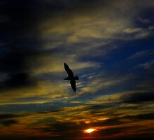 Sunset Swoop by Henry Murray