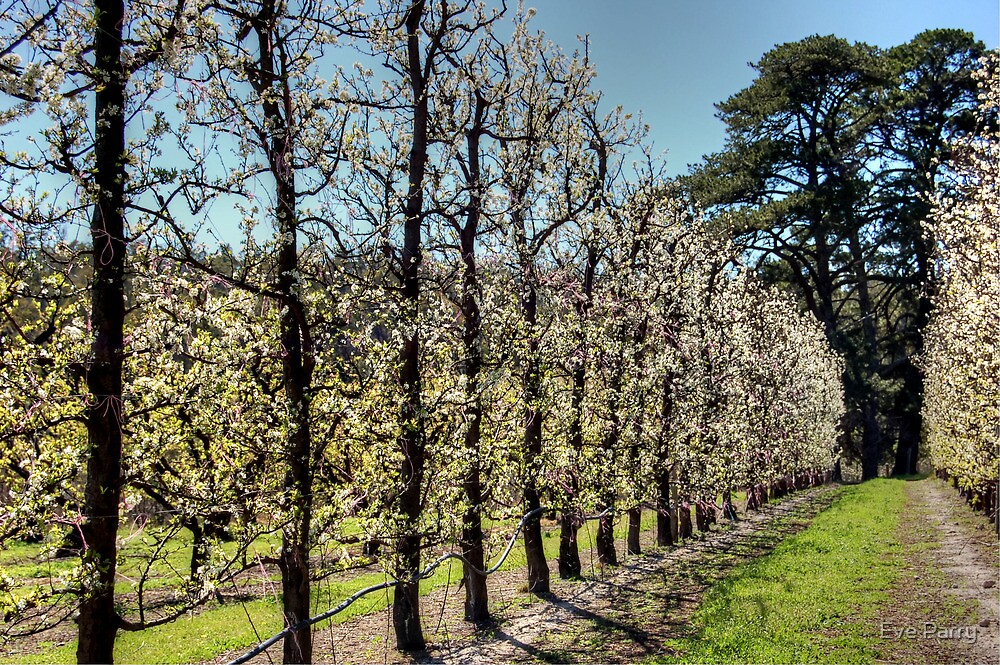 Fruit Trees in Perth Hills by Eve Parry