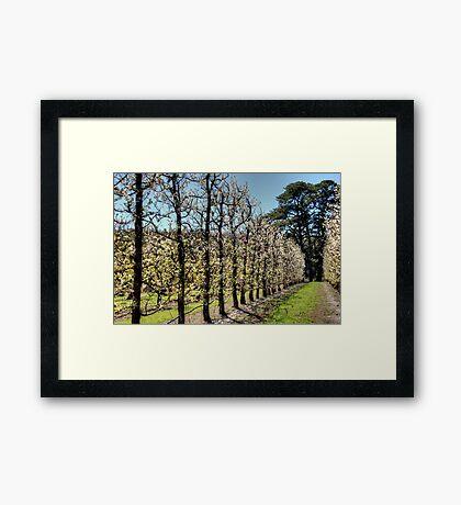 Fruit Trees in Perth Hills Framed Print