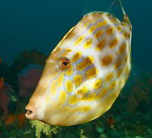 Halifax Mosaic Leatherjacket by Matt-Dowse