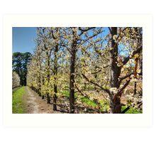 Fruit Trees in Perth Hills # 2 Art Print