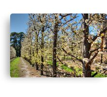 Fruit Trees in Perth Hills # 2 Canvas Print