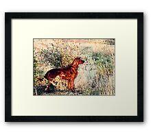 Summer Lee Doggie Framed Print