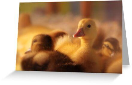 Little Quacker by Lori Deiter