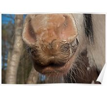 Horses whiskers,  Poster