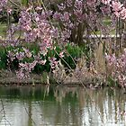 Pinks And Ponds by Carolyn  Fletcher