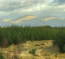 Grizedale Views..A Panorama by Jamie  Green