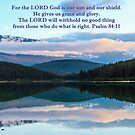 Our Sun and Shield Psalm 84:11 by hummingbirds