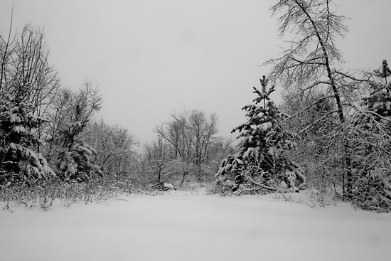 Winter Wonderland by Sean McConnery