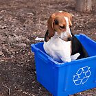 Dogs should not be recycled by Darren Boucher