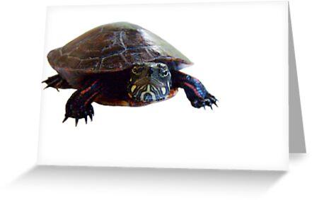 The Turtle by Marcia Rubin