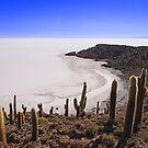 Salar de Uyuni, Bolivia by Natasha M