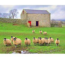 Sheep!!!!! - Wensleydale - HDR Photographic Print