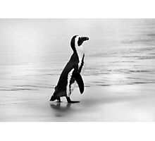 Penguin in black and white Photographic Print