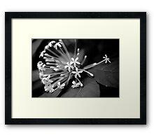 Little White Flowers. Stunning B&W Photo Framed Print