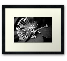 Little White Flowers. Stunning B&W Photo Framed Print