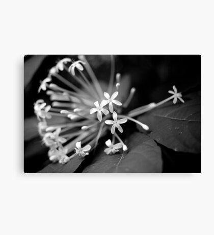 Little White Flowers. Stunning B&W Photo Canvas Print