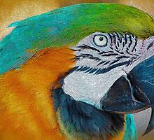 A Beautiful Face by Kathy Baccari