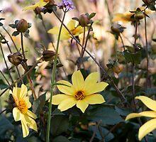 Mellow Yellow by Circe Lucas