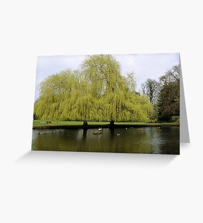 When Two Trees Become One Greeting Card