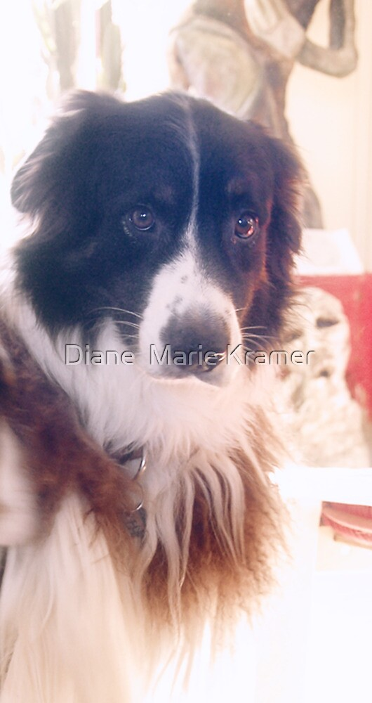 The Beautiful Odin by Diane  Kramer