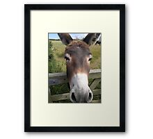 Bay Donkey Framed Print