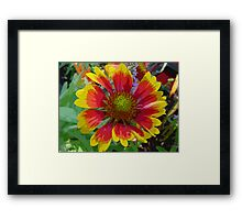 Technicolor Gazania Flower Silk Screen Framed Print