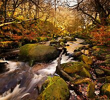 Padley Gorge by David Tait