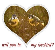 Will you be my love bird? by missmoneypenny