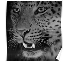 Leopard BW Poster