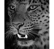Leopard BW Photographic Print