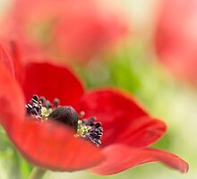Gorgeous Anemone... by Bob Daalder