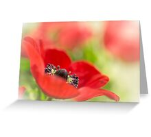 Gorgeous Anemone... Greeting Card
