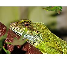 Water Dragon Photographic Print