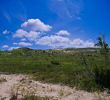 Sand Dunes - Traverse City, MI  by pramodmeee